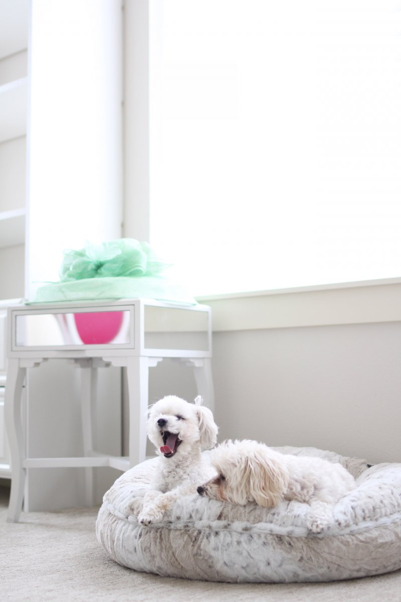 Malti Poo Dogs Fashion Blogger