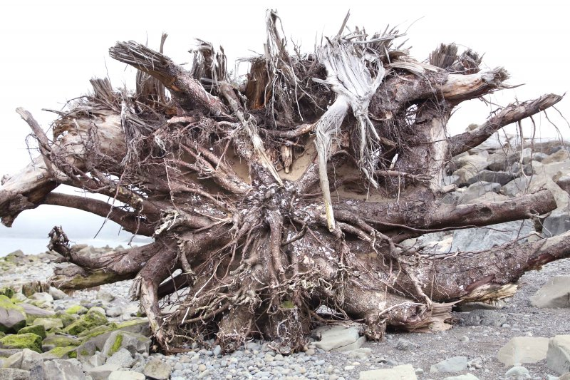 driftwood la push beach