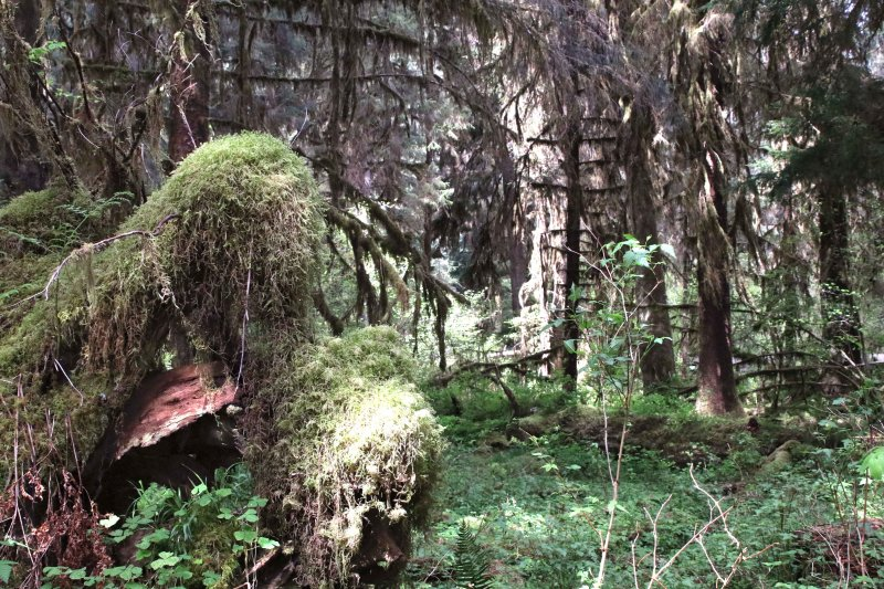 hoh forest washington
