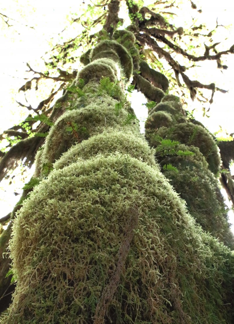 washington state moss