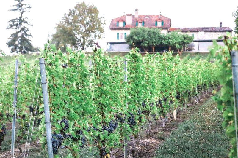 domaine de chateauvieux vineyard